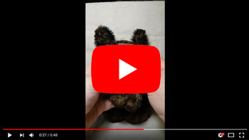 le-roi-des-lucanes-glokdoll-video.jpg